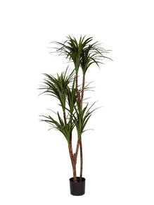 Dracaena Marginata, konstgjord växt